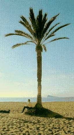 El oasis de las palmeras